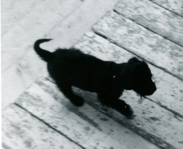 1966-Peppy